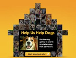 Pedigree Adoption Drive App