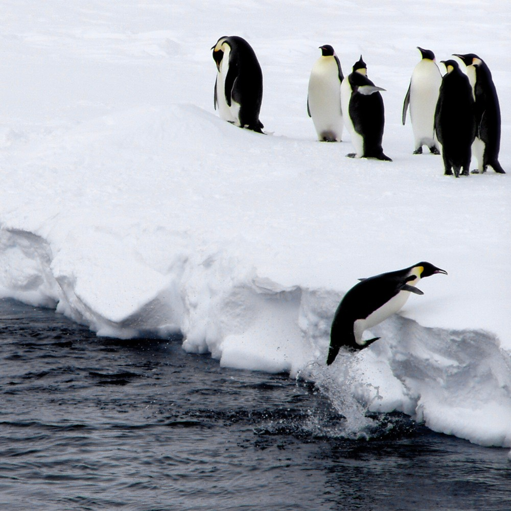 Of penguins and killer whales